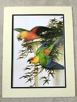 Contemporary Art Print Macaw Parrots Green Blue Red American Artist Walton Ford
