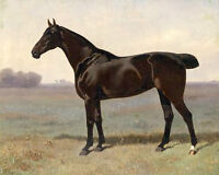 """Handpainted oil painting beautiful black horse with short tail in Wilderness 36"""""""