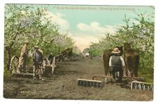 NOVA SCOTIA ORCHARD SCENE - SPRAYING AND FARMING - POSTCARD - WORKING HORSES