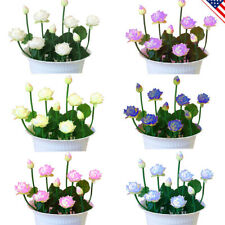Lotus Flower Seeds Water lily Plants Bowl Indoor Aquatic 6 Colors Nelumbo Decor