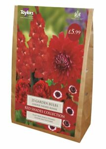 Taylors 25 x Red Shades Collection Bulbs Value Bag (1 Packet)