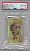1888 N74 Duke's Cig. Fishers and Fish Sheepshead Graded PSA 6