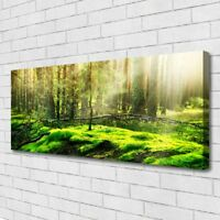 Canvas print Wall art on 125x50 Image Picture Moss Forest Nature