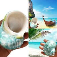 Green Turbo Natural Rare Real Sea Shell Conch Aquarium Home Decor