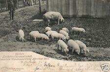 17225/ Foto AK, Hannover, 17. Landwirtsch. Ausstellung, 1903