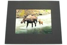 Mom And Me Moose And Calf Photo Donna Rae Wageman Images Of Intentional Beauty