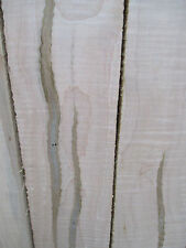 AD Curly Ambrosia Maple Beetle Striped Wormy Maple Table Top Book Shelfs Boards