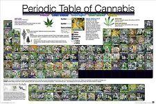 PERIODIC TABLE OF CANNABIS POSTER - 24x36 WEED POT MARIJUANA CHART LIST 5620