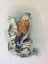 Grande aquarelle rapace faucon attribuée à Mireille Bailly