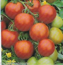 Tomate Harzfeuer F1 Gewächshaus oder Folientomate ca. 15 Korn / Seeds