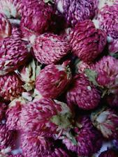 Globe Amaranth Flowers - Gomphrena globosa Dried Organic Apothecary Crafts Wicca