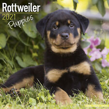 Rottweiler (Puppies) 2021 Puppy Calendar 15% OFF MULTI ORDERS!