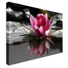Lotus Flower  Canvas Wall Art Picture Print