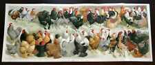 1896 Chicken Breeds, Poultry, Large Victorian Lithograph, 11x28, Antique Print