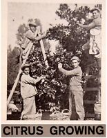 1937 Palestine JAFFA ORANGE Jewish OLD PHOTO BOOK Israel CITRUS GROWING Hebrew