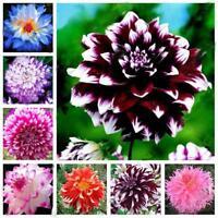 20PCS Mix Dahlie Blumensamen Hausgarten Hof Bonsai Pflanzen Samen Pflanzen I3B9