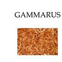 Gammarus Essen für Turtles Reptilien Fisch Vögel Proteine