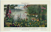 Water Plants I - Original 1908 Chromo-Lithograph by Meyers. Antique