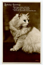 c 1920 Fluffy Persian Birthday Cat Pet photo postcard