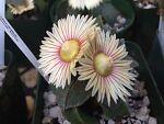 SoCal-Succulents&More