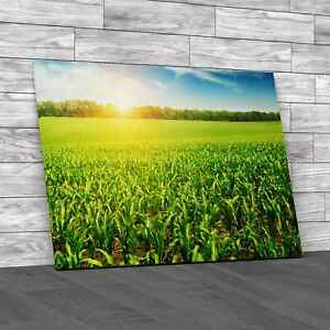 Sunrise Over The Corn Field Original Canvas Print Large Picture Wall Art