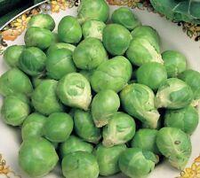 Légumes Chou de Bruxelles Evesham Spéciale Environ Graines de 900