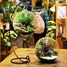 Hanging Ball Glass Flower Planter Vase Terrarium Container Landscape Bottle CA