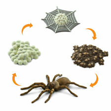 LIFE CYCLE OF A SPIDER 100406 ~ NEW or 2020! FREE SHIP/USA w/$25+SAFARI, Product
