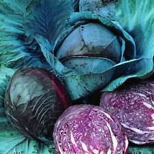 800 Seeds of Cabbage Red Vegetable garden Vegetables Plants