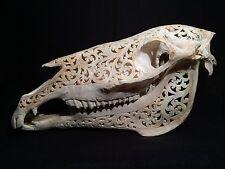 Taxidermie Cabinet de curiosités Tradition Indonesiene Crane de cheval sculpté !