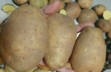 60 TPS True Potato Seeds Russet Yellow ORGANIC mix Potatoes Berry Bred in USA