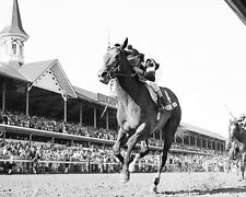 SPECTACULAR BID 1979 KENTUCKY DERBY WINNER HORSE RACING 8X10 PHOTO RON FRANKLIN