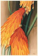 American Modern Art:  Leon Carroll: Skyrocket (Red Hot Poker) - Fine Art Print