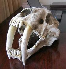 Saber-toothed Tiger Skull Paleontology Model Smilodon Home Statue Collectible