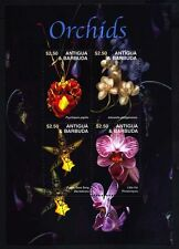 antigua ca 2003 flowers orchids fleurs blumen flora orchidees phalaenopsis ms4v