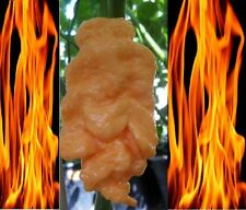 10 seeds Jays Peach Ghost Scorpion cross between Bhut jolokia & Scorpion pepper
