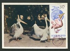 ROMANIA MK 1965 FAUNA PELIKAN PELICAN VÖGEL MAXIMUMKARTE MAXIMUM CARD MC d2759