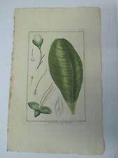 BUCHOZ Le grand jardin de  l'univers 1785-1791 49 x 30 cm 2 planches 9+10