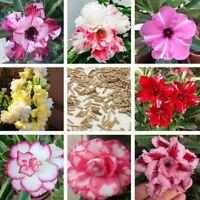6PCS Desert Rose Flowers Perennial Outdoor And Indoor seeds Home Garden Bonsai P