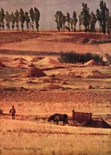 1951 Irving Penn Spain Red Soil Cattle Farmer Landscape Vintage Photo Litho Art