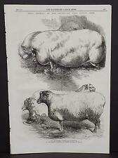 Illustrated London News Single-Page A2#47 Dec. 1864 Prize Animals-Pig and Sheep