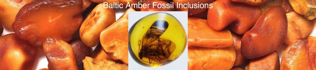 Baltic Amber Fossils