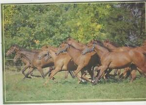Horse Postcard - Pan Dragon - Let's GO