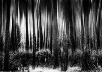 Framed Print - Black & White Dark Eerie Gothic Forest (Picture Poster Art Woods)