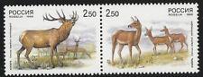 Russland aus 1999 ** postfrisch MiNr.723-724 Zweierpaar - Tiere, Isubra, Hirsch!