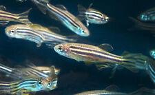 Peces para acuario agua dulce (eligir especies)  envió 24h
