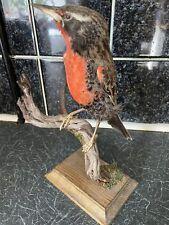 More details for taxidermy birds- peruvian meadowlark ?
