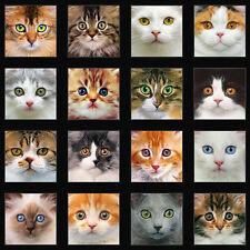 "Adorable Pets Cats Eyes Elizabeth's Studio Fabric Panel 24x44"""