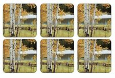 Pimpernel Coasters, Birch Beauty, Pack of 6 (2010268884)