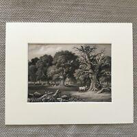 1865 Antico Woodland Stampa Incisione Legno Landscape Alberi 19th Secolo